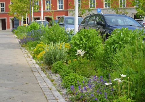 Pavement and street with parked cars and a stripe of flowers and vegetation, green city concept