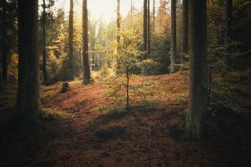 Herbstliches Licht im mystischen Wald