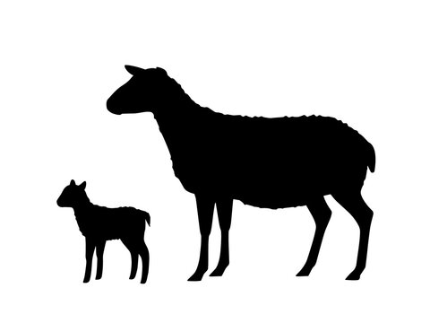Vector illustration of sheep with young lamb. Silhouettes of farm animals, domestic small cattle adult and young.