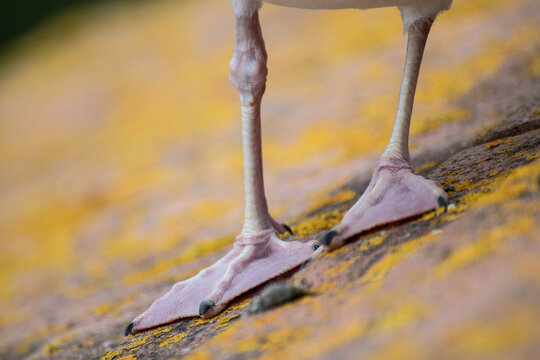 pattes d'une mouette goéland close-up