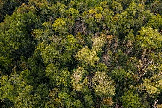 Luftaufnahme eines gesunden deutschen Mischwalds mit einigen lichten Baumkronen