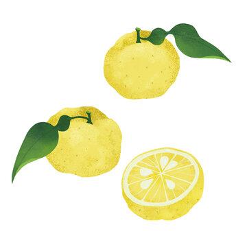 柚子の手描きイラスト