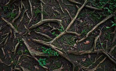 Top-down view of the surface of a forest path covered in twisting roots, dark soil, small plants, and leaf litter