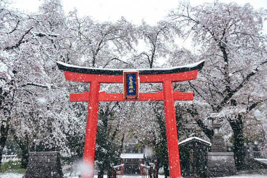 神社の桜(雪)