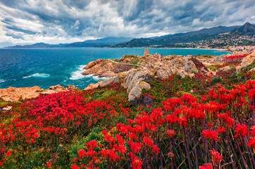 Blooming red flowers on de la Pietra cape with Genoise de la Pietra a L'ile-Rousse tower on background. Captivating summer scene of Corsica island, France, Europe. Traveling concept background. Fotobehang