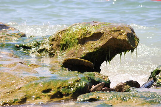 stones in seaweed by the sea