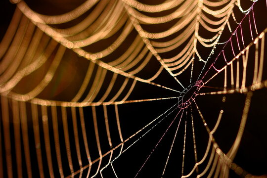 Close up of refracted light on spider web