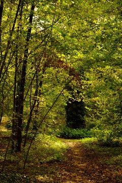 Dans la forêt d'automne, Paris, France