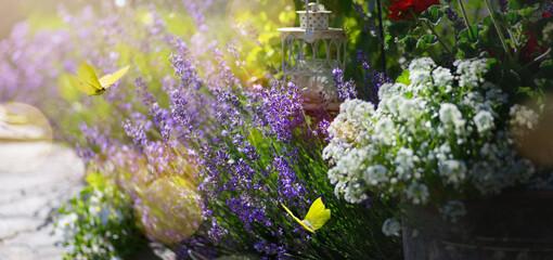 Art september floral landscape; beautiful  lavender flower and fly butterfly against evening sunny sky; nature landscape background.