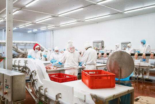 line packing meat products, meat factory.Food Convenience food.