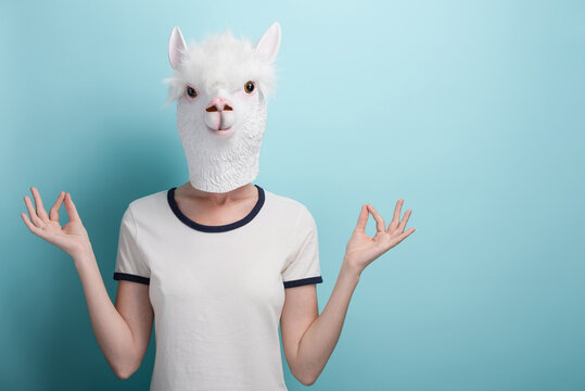 Young woman wearing alpaca mask. Hands in meditation yoga mudra sign. Isolated on blue background.