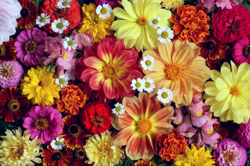 Wall Murals Floral floral background with dahlias.