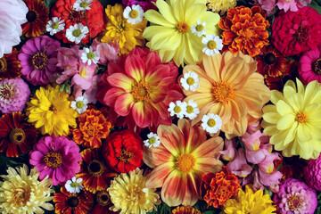 Photo sur Plexiglas Fleur floral background with dahlias.