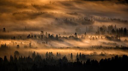 Aluminium Prints Morning with fog Sunrise over the mountain forest. Bieszczady National Park. Carpathian Mountains. Poland.