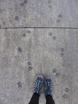 Photographer's feet surrounded by paw prints