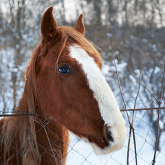A young horse behind the fence. Foal.