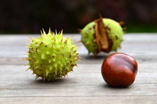 Horse chestnut on a wooden table, autumn background, close up.