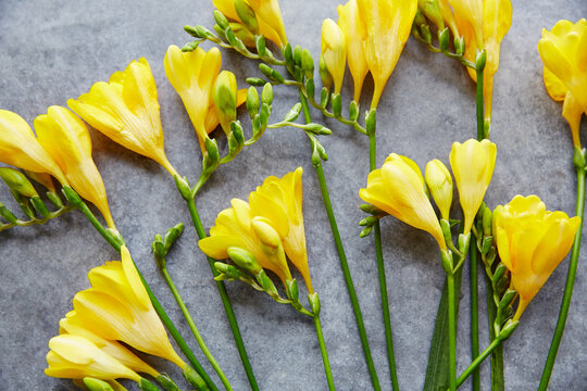 Still Life of Yellow flowers on concrete