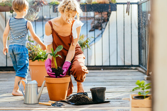 Blond mature lovely woman gardener in brown overalls and her cute son planting banana tree in to pots on the terrace outdoor in summer day.