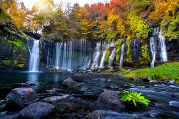 Wall Mural - Shiraito waterfall in autumn, Japan.