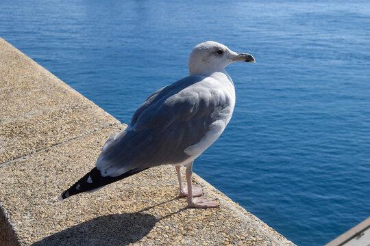 Seagull on seawall over Mediterranean sea
