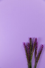 View of lilacs flowers on purple background