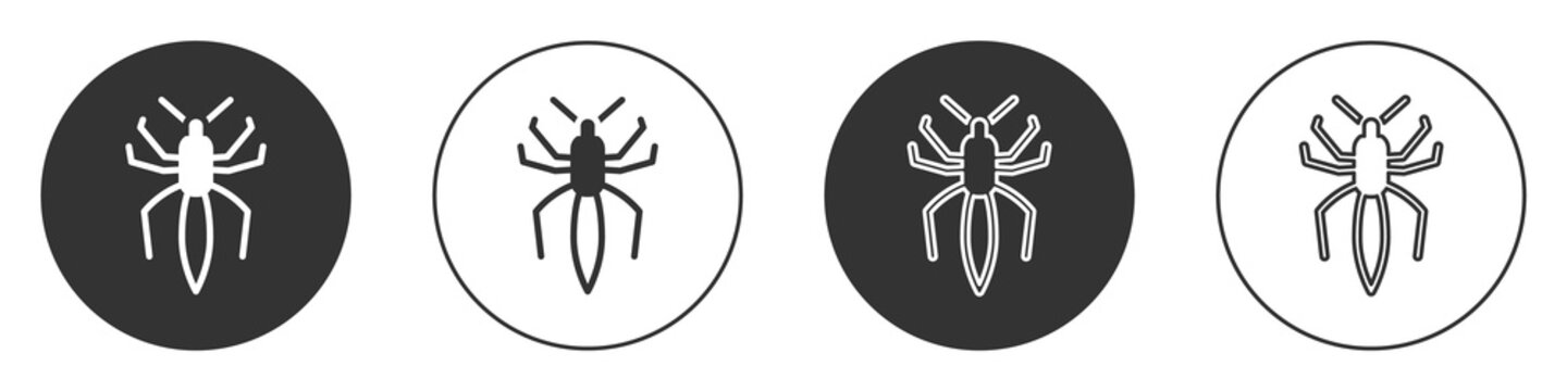Black Spider icon isolated on white background. Happy Halloween party. Circle button. Vector.