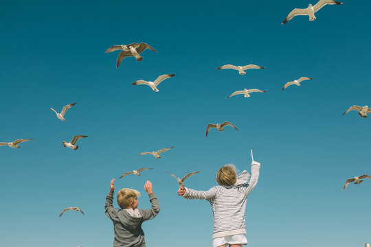 Siblings playing with flock of seagulls flying over them