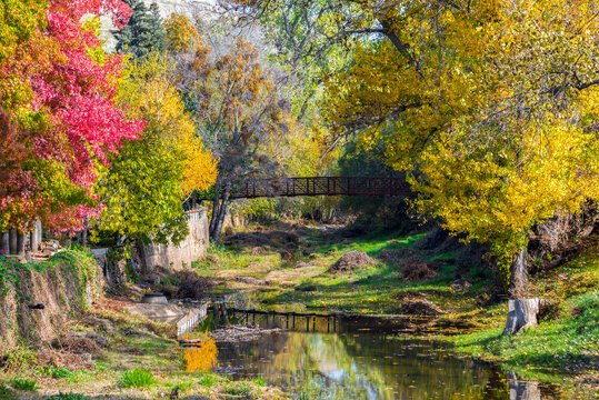 Fall colors on Sutter Creek