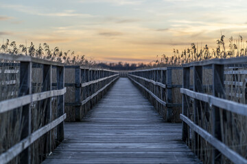 Long wooden pier surrounded by grass during the sunset