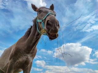 horse on a blue sky