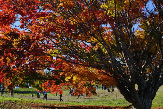 Autumn landscape. Autumn is a wonderful time of the year, with beautiful colors and a peaceful atmosphere around, Japan