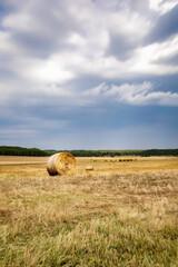Fototapeta belka siana na polu chmury i rżysko obraz