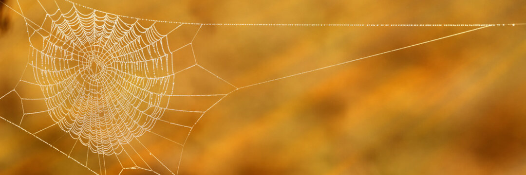 Spider web with dew drops in fall in early morning sunlight