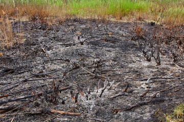 The forest fire burned vegetation. Only ash and ashes remained.