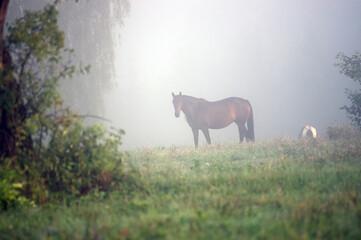 Printed kitchen splashbacks Khaki Stojący koń na polanie we mgle