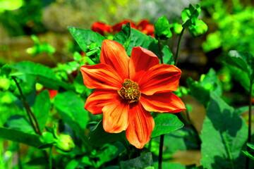 Piękne kolorowe kwiaty kwitnące latem w miejskim ogrodzie botanicznym