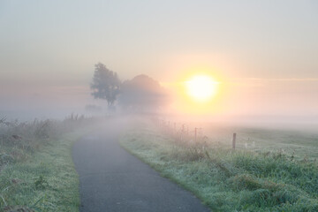rural road in dense fog at sunrise