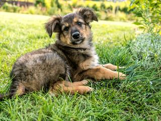 Puppy dog sitting in the grass