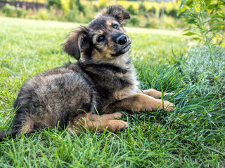 German Shepherd bitch with puppy dog sitting in the grass
