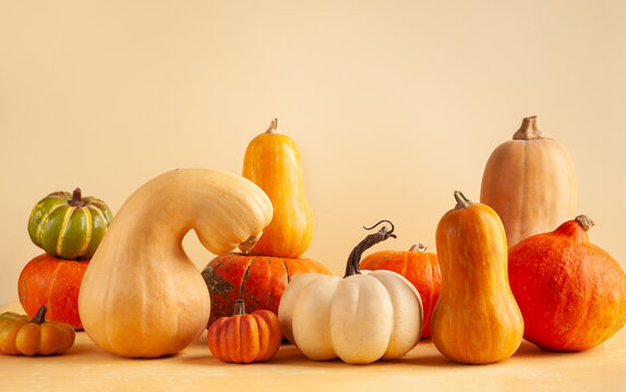 Still life with different sort of pumpkins. Autumn concept with food  on pastel background with copy space.