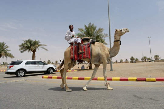 Saudi Arabia launches world's largest camels hospital