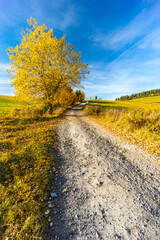 road with autumn tree near saddle Beskyd in Slovakia