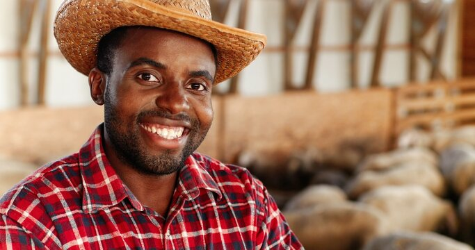 Portrait of young handsome African American man farmer in hat looking at camera, crossing hands and smiling in barn with livestock. Happy cheerful male shepherd smile in stable. Dolly shot. Zooming.