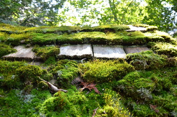 worn wood roof tiles or shingles with green moss
