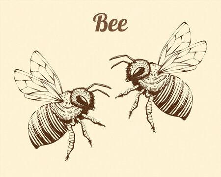 Antique engraving of honeybees