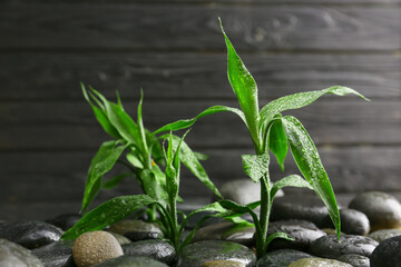 Spa stones and bamboo on dark background. Zen concept