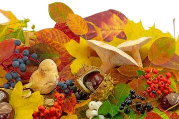 Herbstdekoration aus bunten Blättern, Pilzen und Früchten
