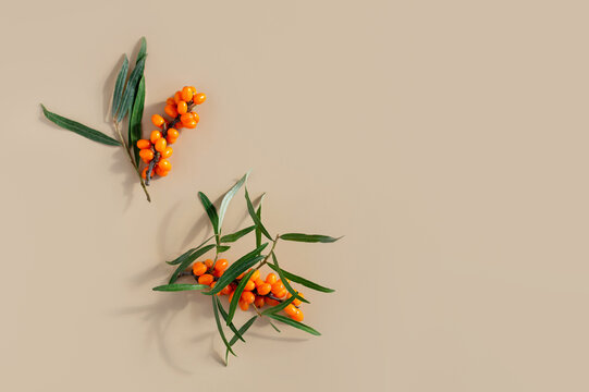 Ripe sea buckthorn berries on a beige background. Autumn natural background.