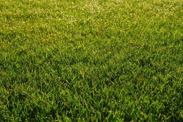 fresh green grass field